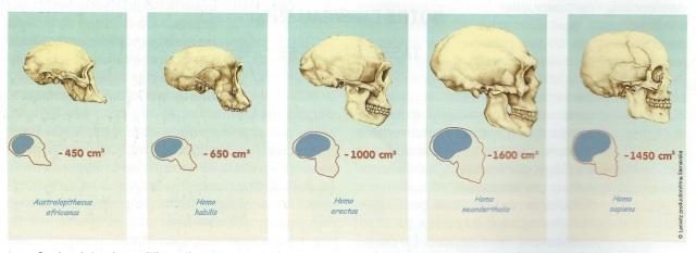 skull_evolution.jpg