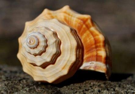 fibonacci-3990297_960_720